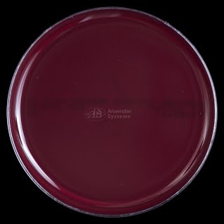 Tryptic Soy Blood Agar